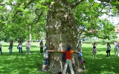 Drevo = življenje 2012